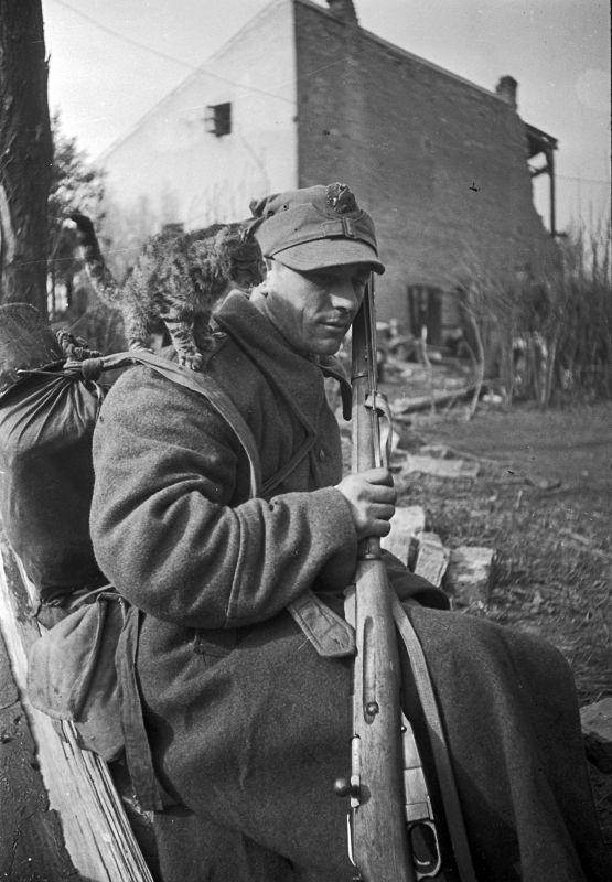 Soldat de l'armée polonaise, armé d'un fusil Mosin, avec un chat sur l'épaule