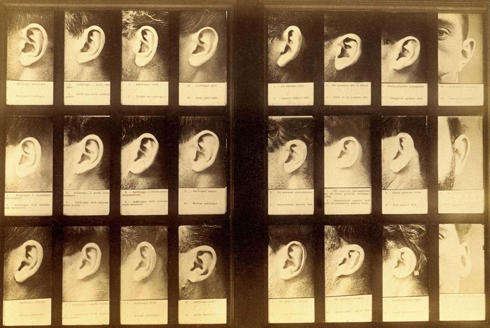 Le système Bertillon qui a catalogué les criminels par leurs mesures physiques, 1894
